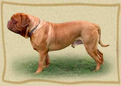 Quaker dog